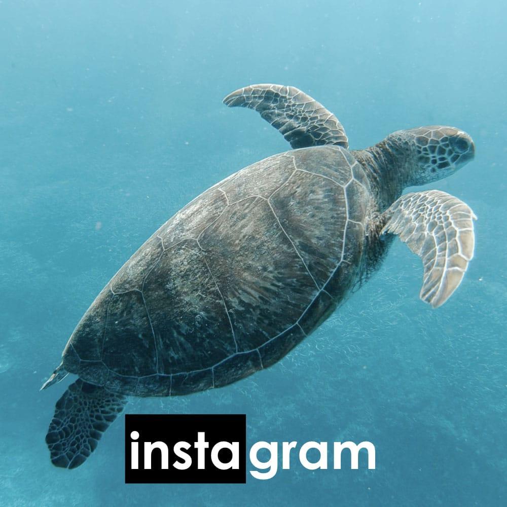 Instagram - Pour plus d'actu