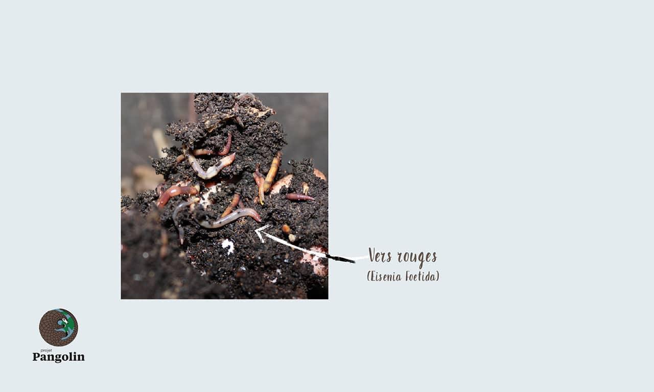 Définition d'un compost