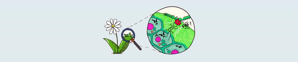Défenses des plantes et huilles essentielles