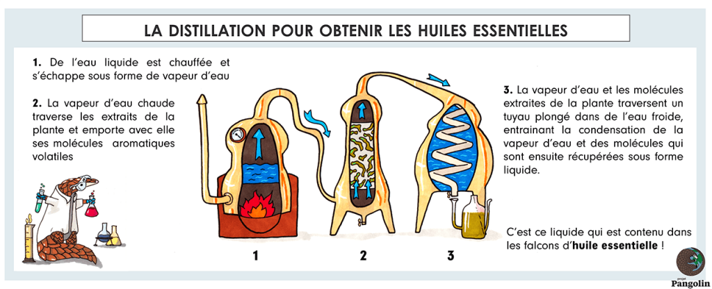 La distillation pour obtenir les huiles essentielles