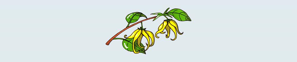 L'huile essentielle d'Ylang-Ylang