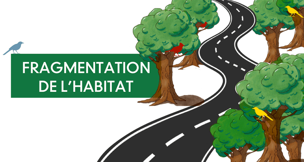 Fragmentation de l'habitat