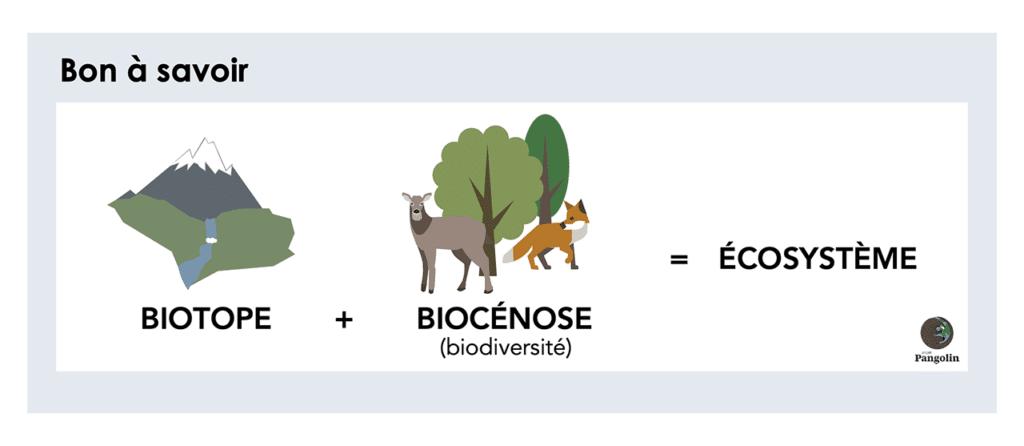Définition de l'écosystème