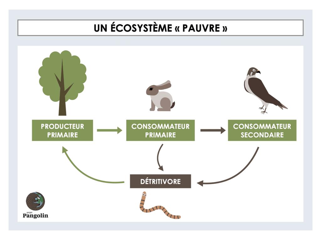 """Un écosytème """"pauvre"""""""