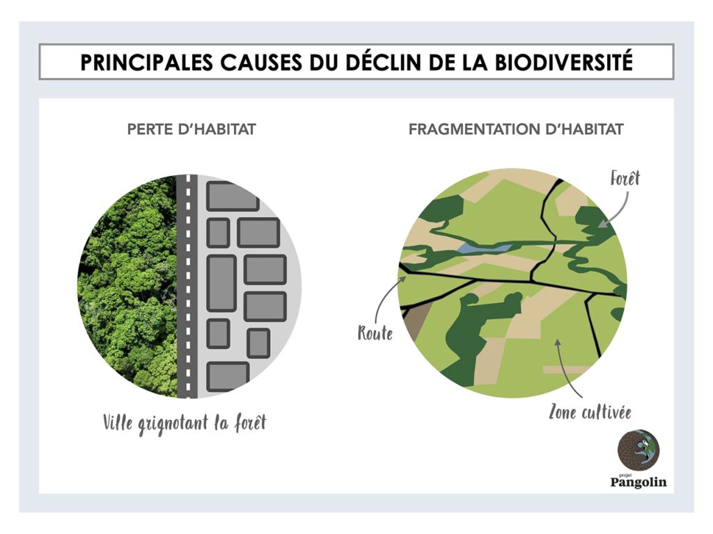 Principales causes du déclin de la biodiversité