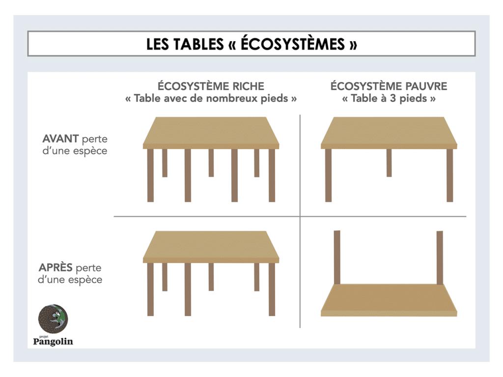 """Les tables """"écosystèmes"""""""