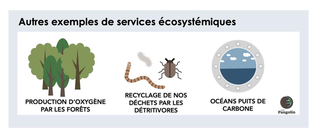 Autres exemples de services écosystémiques