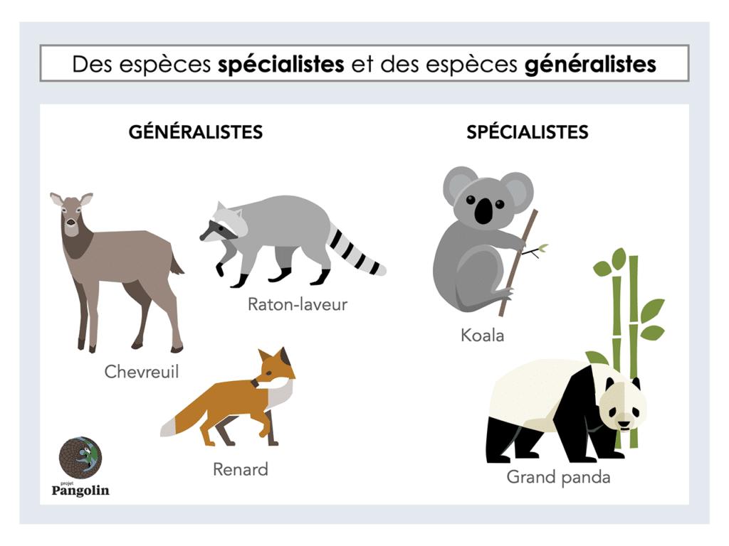 Des espèces spécialistes et des espèces généralistes