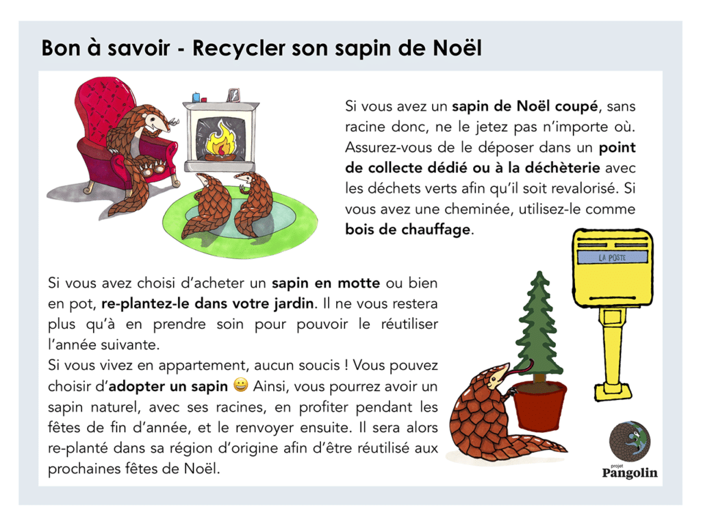 Comment recycler son sapin de Noël